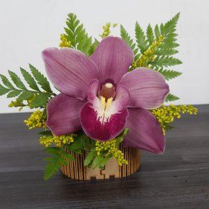 Solitario Orquídea